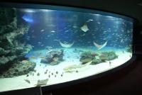 サンシャイン水族館 館内1階大水槽「サンシャインラグーン」