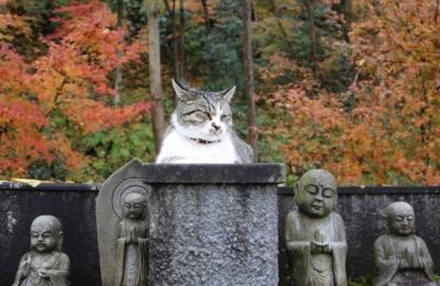猫カレンダー撮影担当・尾崎修二カメラマンと行く 癒やしの猫を撮る!