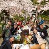 江戸花見名所の桜祭りで50人の桜の名曲大合唱フラッシュモブ花見!