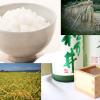 新潟・魚沼地方をまるかじり!コシヒカリ食べ比べ&地酒祭り!