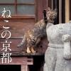 岩合光昭写真展「ねこの京都」(京都開催)