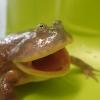 「カエルの日」記念イベント