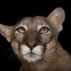 写真と映像で知る絶滅危惧種の動物展