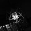夏目漱石 没100年記念 特別展「吾輩ハ、デザイナーデモアル」