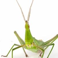 海野和男 写真展「虫の目になってみた」