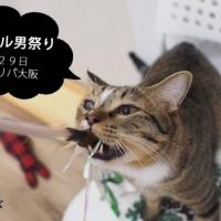 ネコビル男祭り~来れメンズ!~