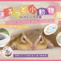 小動物の合同写真&物販展「まるっと小動物展 in カレッタ汐留