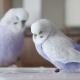 """鳥たちの""""一瞬の美しさ""""を表現した「鳥物語トリストーリー展」"""